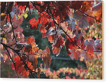 Autumn Grapes And Spider Webs Wood Print by Tanya  Searcy