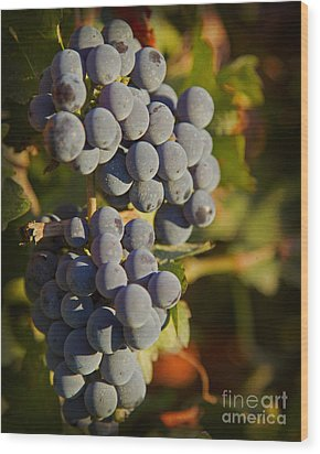 Autumn Grapes On A Vineyard Branch In The Fields At A Winery In  Wood Print by ELITE IMAGE photography By Chad McDermott