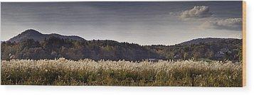 Autumn Grasses - North Carolina Autumn Scene Wood Print by Rob Travis