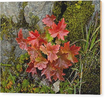 Autumn In Canada Wood Print by Sylvia Hart