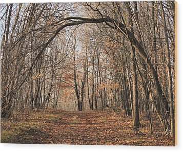 Wood Print featuring the photograph Autumn In The Woods by Penny Meyers