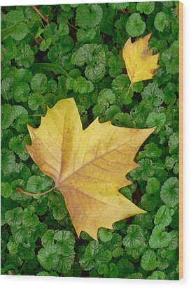 Autumn Just Began Wood Print by Philippe Taka