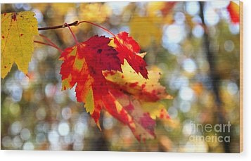 Wood Print featuring the photograph Autumn Leaves by Adrian LaRoque