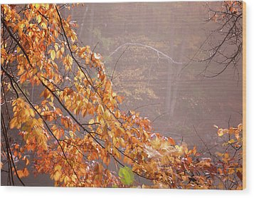 Wood Print featuring the photograph Autumn Leaves And Fog by Tom Singleton