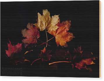Wood Print featuring the photograph Autumn Leaves by Beverly Cash