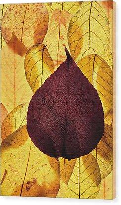 Autumn Leaves Wood Print by Bob Decker