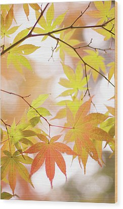 Autumn Leaves Wood Print by Cocoaloco