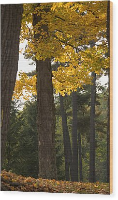Wood Print featuring the photograph Autumn Leaves by Darleen Stry