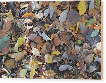 Wood Print featuring the photograph Autumn Leaves by David Grant