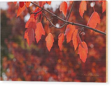 Wood Print featuring the photograph Autumn Leaves In Medford by Mick Anderson