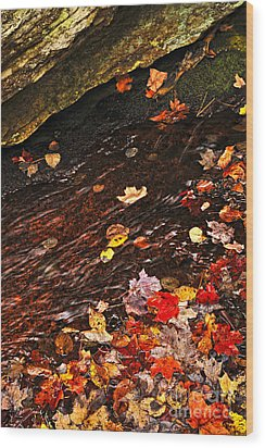 Autumn Leaves In River Wood Print by Elena Elisseeva