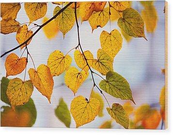 Autumn Leaves Wood Print by Jenny Rainbow