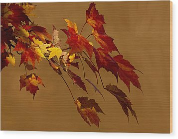 Wood Print featuring the photograph Autumn Leaves by Judy  Johnson