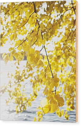 Autumn Leaves On Branch With Lake In Background, Close-up Wood Print by Johner Images