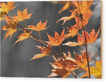 Autumn Leaves  Wood Print by Sandy Fisher