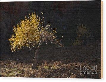 Autumn Light Wood Print by Mike  Dawson