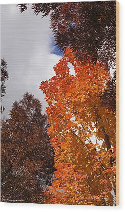 Wood Print featuring the photograph Autumn Looking Up by Mick Anderson