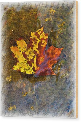 Wood Print featuring the digital art Autumn Maple Leaf In Water by Debbie Portwood
