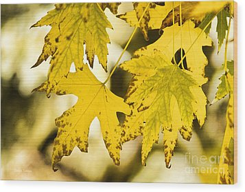 Autumn Maple Leaves Wood Print by James BO  Insogna