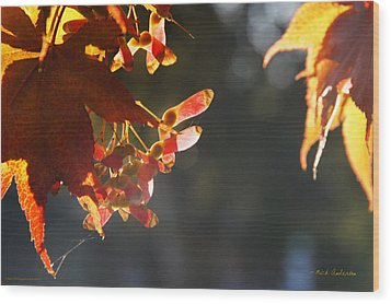 Wood Print featuring the photograph Autumn Maple by Mick Anderson