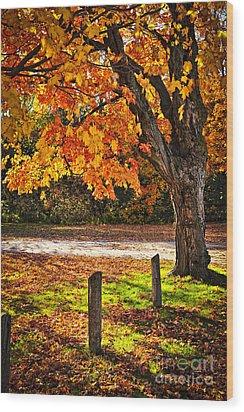 Autumn Maple Tree Near Road Wood Print by Elena Elisseeva