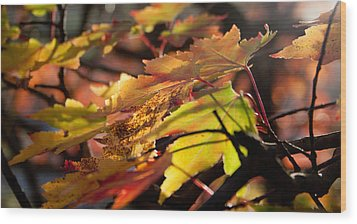 Autumn Morning Wood Print by David Troxel