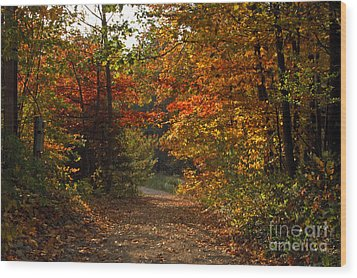 Autumn Nature Trail Wood Print by Cheryl Cencich