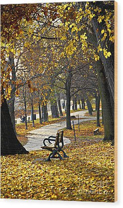 Autumn Park In Toronto Wood Print by Elena Elisseeva