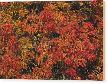 Autumn Red Wood Print by Garry Gay