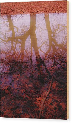 Autumn Reflections  Wood Print by Xoanxo Cespon