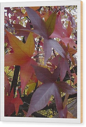 Autumn Rhapsody Wood Print by Frank Wickham