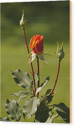 Wood Print featuring the photograph Autumn Rose by Mick Anderson