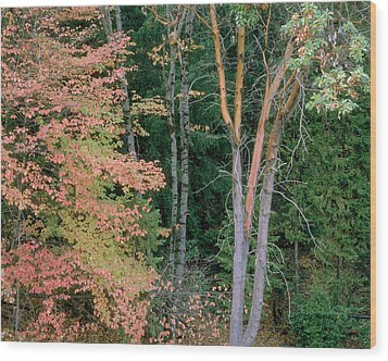 Autumn Scene Wood Print by Mark Greenberg
