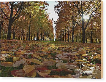 Autumn Sheets Carpet Wood Print by Bruno Santoro