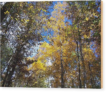 Wood Print featuring the photograph Autumn by Sheila Silverstein