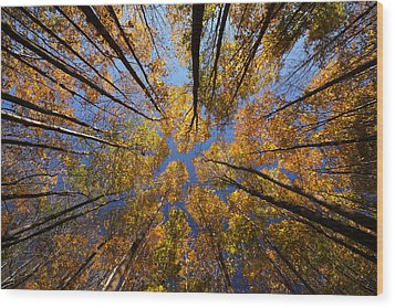 Autumn Sky Wood Print by Mircea Costina Photography