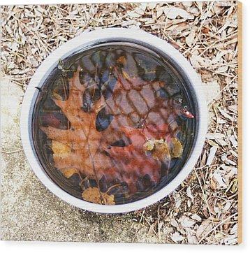Autumn Soup Wood Print by Todd Sherlock