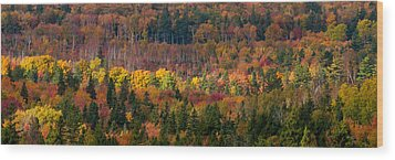 Autumn Trees Panorama Wood Print by Matt Dobson