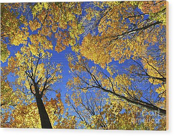 Autumn Treetops Wood Print by Elena Elisseeva