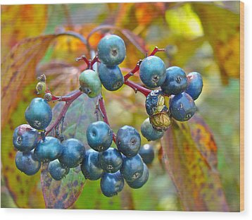 Autumn Viburnum Berries Series #4 Wood Print by Mother Nature