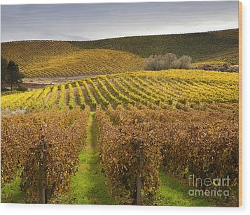Autumn Vines Wood Print by Mike  Dawson