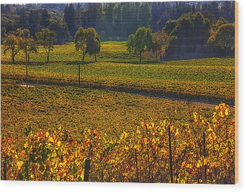 Autumn Vineyards Wood Print by Garry Gay