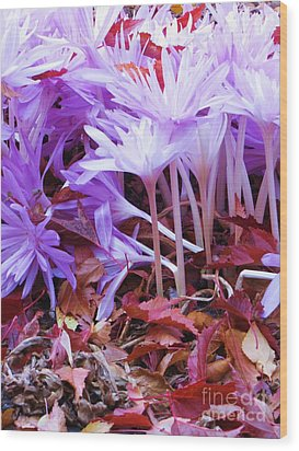 Wood Print featuring the photograph Autumn Water Lily Crocus by Michele Penner