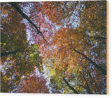 Autumnal Canopy Wood Print by Rob Amend