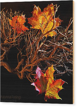 Wood Print featuring the photograph Autumnal Feelings by Beverly Cash