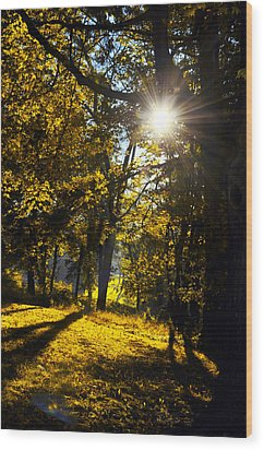 Autumnal Morning Wood Print by Bill Cannon