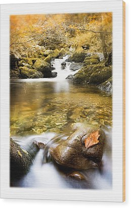 Autumnal Stream Wood Print by Mal Bray