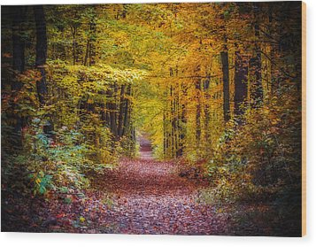 Autumns Canopy Wood Print