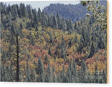 Autumns Palette Wood Print