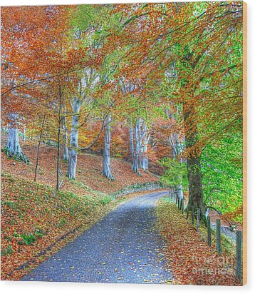 Autumns Way Vert Wood Print by John Kelly